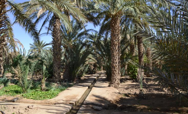 palmeral hassilabied